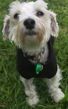 Pet sitter for your pooch! Fitzroy North Yarra Area Preview