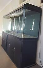 fish tank 450 ltr Findon Charles Sturt Area Preview