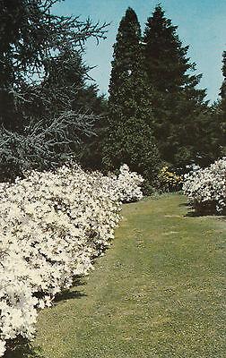 Winterhur garden Henry Francis du pont winterhur Delaware  #D30