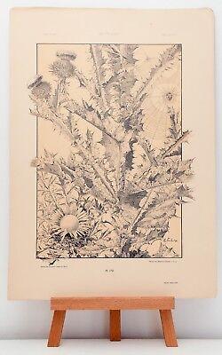Farb-Lithographie Plate 179 Distel Spinne 1886 Die Pflanze in Kunst und Gewerbe