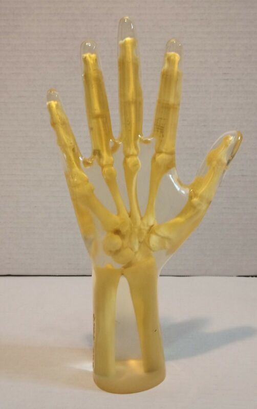 "X-RAY TRANSPARENT Hand / Wrist PHANTOM  ""Good Condition"""