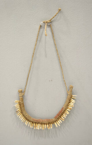 Papua New Guinea Necklace Dog Teeth Brides Price Currency Wealth Necklace