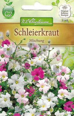 Chrestensen Schleierkraut Mischung Rose-weiß  für ca.200 Pflanzen Samen Blumen