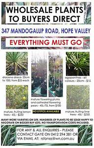 HUGE PLANT SALE!! EVERYTHING MUST GO!!! Hope Valley Kwinana Area Preview