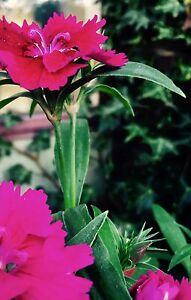Gardener/Maintenance/green waste Canberra Queanbeyan Chapman Weston Creek Preview
