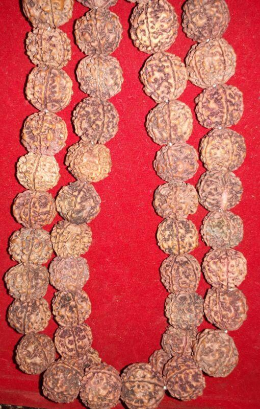 Rudraksha kantha 18-20mm Approx.54 Beads Kantha 5 Faced/Mukhi 100% Natural