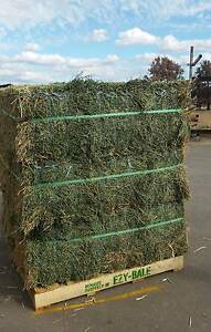 Lucerne Hay (Small square bales) Roseworthy Gawler Area Preview