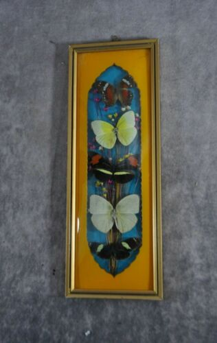 """Vintage Butterfly Display Convex Glass Wall Hanging 12"""" x 4"""""""