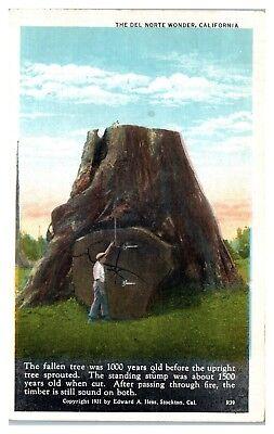 1931 The Del Norte Wonder, CA Postcard
