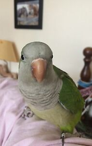 DO  YOU  NEED TO  REHOME YOUR PARROT ??