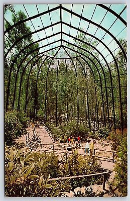 The San Diego Zoo Walk Through Bird Cage Aviary California Chrome Postcard New