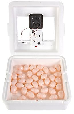 Little Giant Still Air Incubator Wdigital Display Durable Styrofoam Hold 41eggs