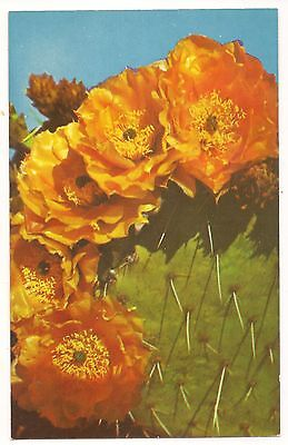 Prickly Pear Cactus Plant,Vintage Unused Postcard ()