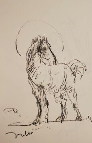 JOSE TRUJILLO - Original Charcoal Paper Sketch Drawing 11X17 HORSE EQUESTRIAN