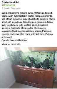 Fish Tank with Fish Sorell Sorell Area Preview