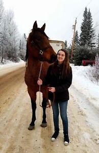 2014 Quarter Horse Mare