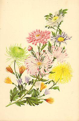 p & o - s.s. himalaya menu (  1951 ) the chrysanthemum