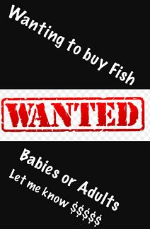 Wanting to buy bulk fish babies or adults
