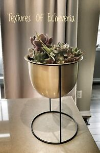 Ultra Modern Decor Live Succulents