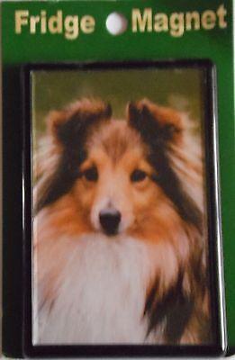 Sable Shetland Sheepdog Magnet