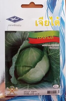 Cabbage Seeds Thai spice Vegetable Cooking Food Garden Organic plant Grow up for sale  Shipping to United States