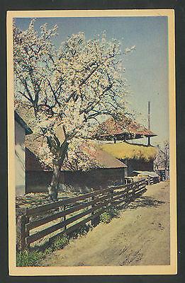 Boerderij met bloeiende fruitboom