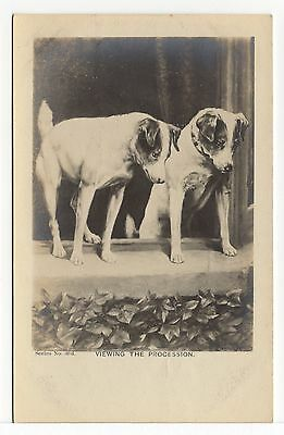 SMOOTH FOX TERRIER DOGS AT A WINDOW OLD DOG PICTURE POSTCARD