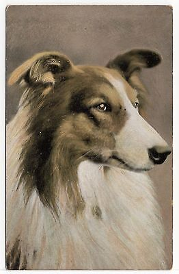 ROUGH COLLIE  HEAD STUDY OLD DOG ART POSTCARD