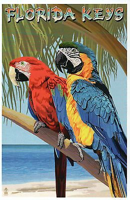 Parrots in the Florida Keys, FL Animal, Tree Ocean Beach, Bird - Modern Postcard