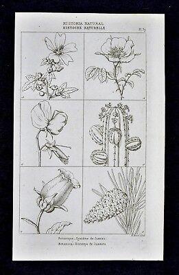 1859 Didot Freres Botanical Prints x 4 - Various Flowers Lilly Cactus Orchid etc (Orchid Botanical Prints)