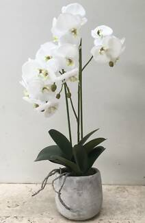 New premium quality artificial white phalaenopsis orchid