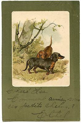 chiens teckel dachshund dogs
