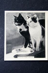 Black-and-White-Cats-Original-1930s-Vintage-Photo-Card-VGC