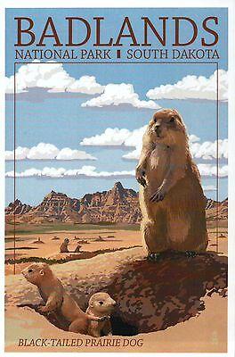 Badlands National Park South Dakota, Prairie Dog, SD, Animal --- Modern Postcard ()