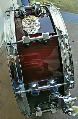 Premier Signia maple 14x5.5 snare drum amazing sound