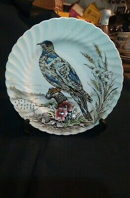 "British Anchor 'Wild Birds of Heath & Moorland' ""Pigeon""  Display Plate  25cm"