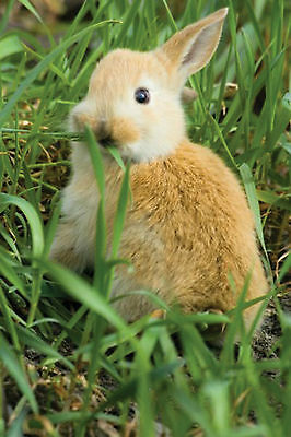 Timothy Hay Seeds -Best for Bunnies, Chinchillas, and Guinea Pig - 3,000+