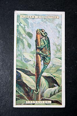 CHAMELEON    Vintage 1920's  Colour Card