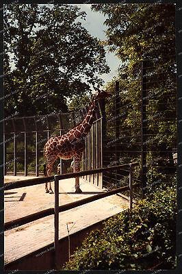 Foto-Stuttgart-Wilhelma-Bad-Cannstatt-Giraffe-Gehege-Architektur-um-1985-34