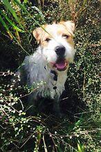 Alfie seeks loving home.(Found loving home) thanks Bonbeach Kingston Area Preview