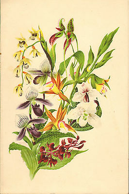 p & o - s.s. himalaya menu (  1951 ) the orchid