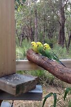 Budgies Yallingup Busselton Area Preview