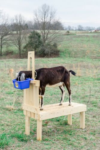 New Small Goat Milking Stand for Pygmy and Nigerian Dwarf Goats 32in. 1x6 Deck