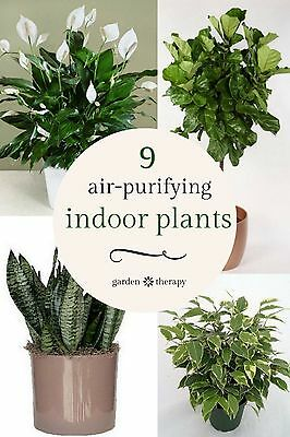 The Essential Guide To Growing Beautiful Houseplants Ebay
