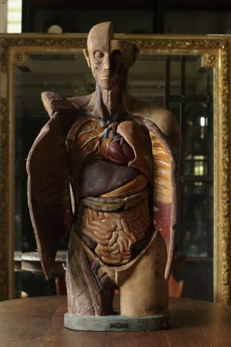 antique anatomical medical human model New York Scientific Supply circa 1930