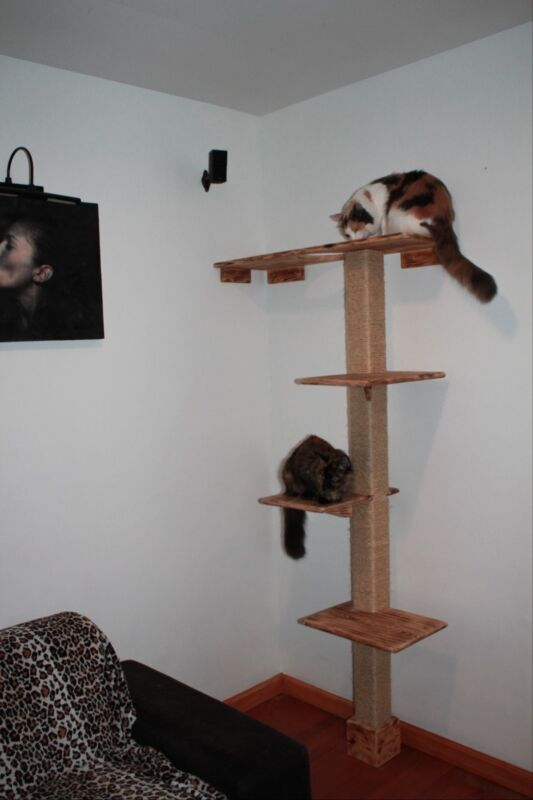 Deluxe kitty climbing structure/ Tree House