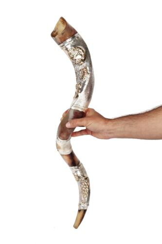 Lion Of Judah Kudu Horn Shofar 28- 32 Inch Coated With Silver Sleeves