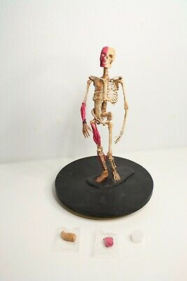 Handmade Anatomical Anatomy Skeleton Model 4x16 Inch Lazy Suzy Handmade
