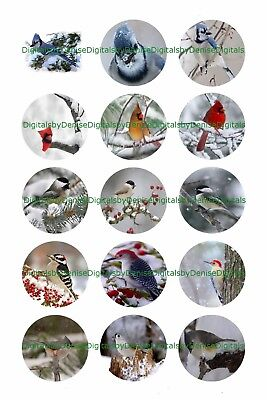 Christmas Birds C 1  Circles Bottle Cap Images   2 45  5 50    Free Shipping