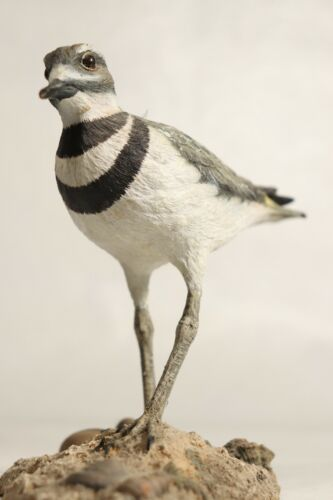 "Realistic 5"" Killdeer Bird Figurine by Ma Hai Feng - The Nature Company"